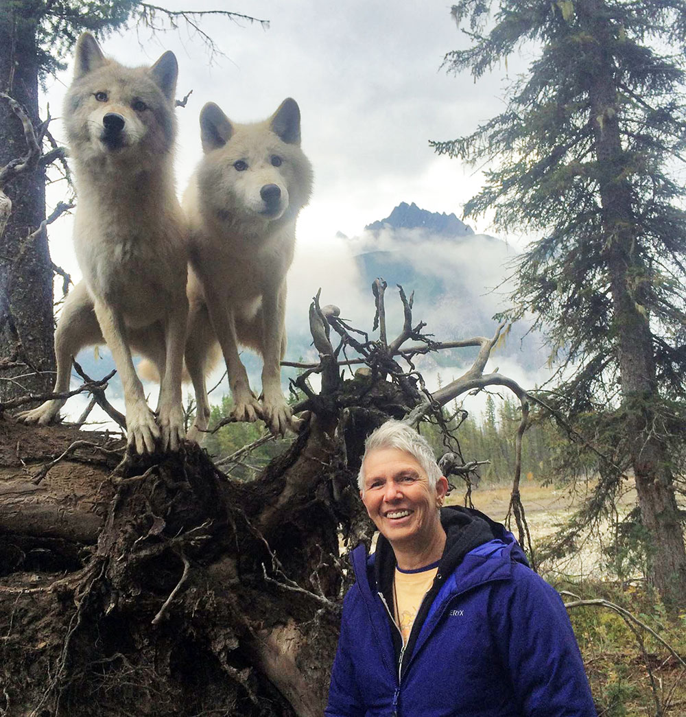 Jodey Castricano with habituated wolves