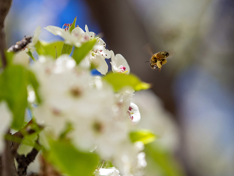 The UN Decade of Ecosystem Restoration designation is intended to raise awareness of the importance of protecting and reviving ecosystems around the world for insects, plants animals and all other forms of life on the planet.